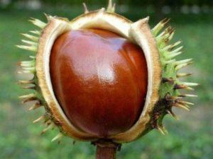 10 способов для борьбы с варикозным расширением вен