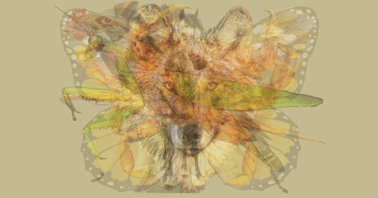 Животное, которое вы видите первым, раскрывает вашу доминирующую личность