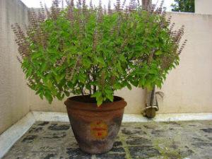12 растений создающие позитивную энергию в вашем доме!