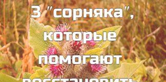 Есть 3 ″сорняка″, которые помогают восстановить хрящи и кости