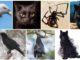 Выберите животное, чтобы раскрыть скрытую темную сторону вашей личности