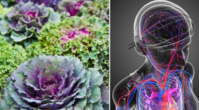 5 причин, по которым вы должны добавить капусту в свой рацион, чтобы укрепить здоровье